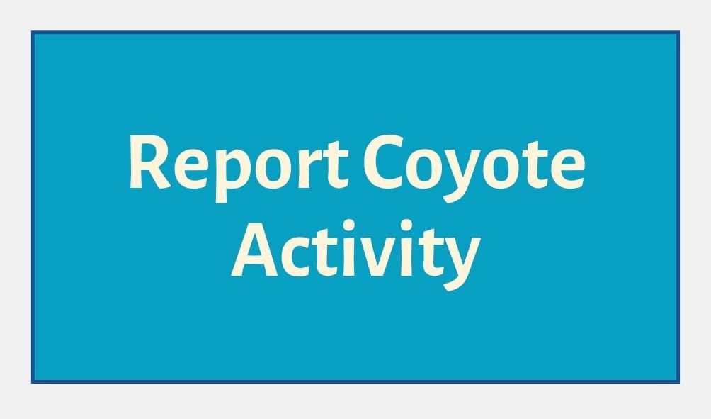 Report Coyote Activity Button Blue Background Opens in new window